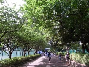 緑が多い学習院大学