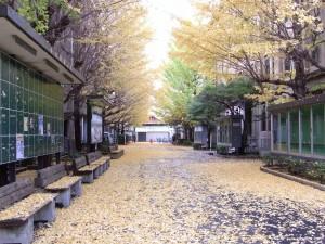 子どもたちの研究材料がいっぱい! 早稲田大学