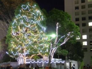 上智大学のクリスマスツリー!