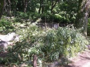 戸山公園(新宿区)