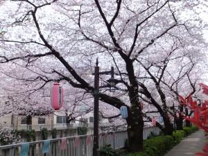 神田川の遊歩道