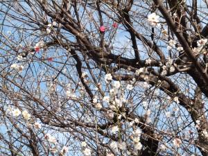 子どもたちと「春」を感じてきました。